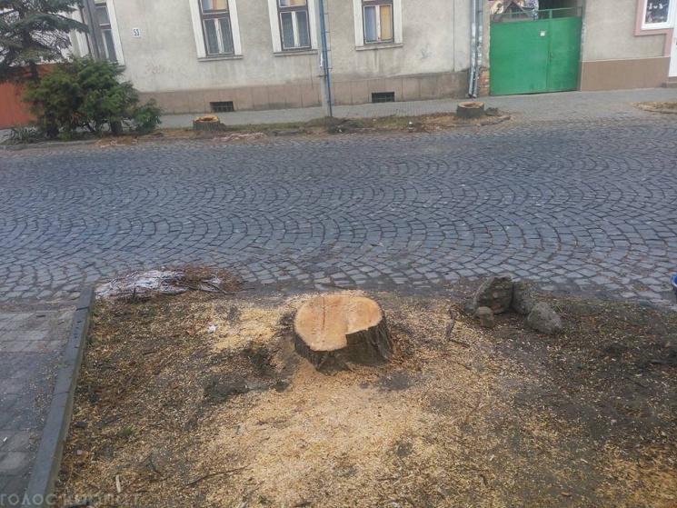 Я, липа, давала вам життя! А Ви?! У Мукачеві оригінально виступили проти вирізки дерев на вулицях міста