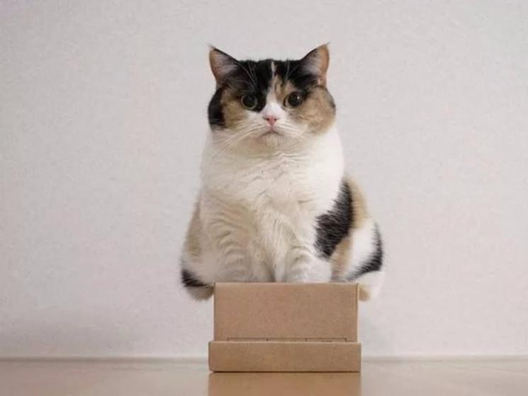 Як коти, всупереч логіці, знаходять свою зону комфорту