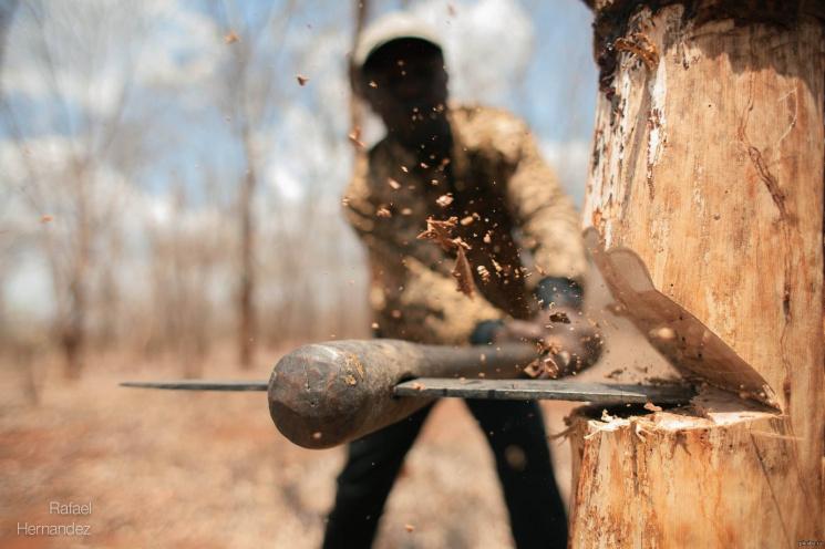 Тячівщина потрапила в ТОП, де найбільше нелегально рубають дерева