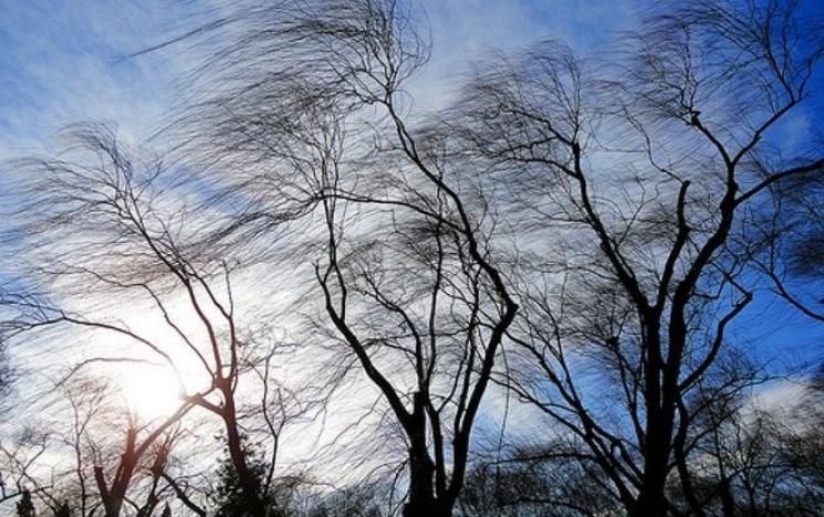 """Результат пошуку зображень за запитом """"сильний весняний вітер"""""""