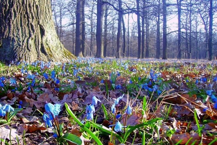 Чому 28 березня не можна мити голову, треба сховати на одязі шпильку і обов'язково піти у ліс
