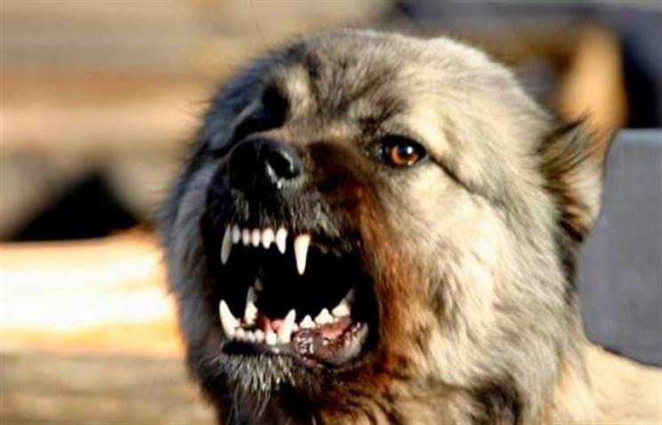 На Ровенщине бешеный пес набросился на ж…