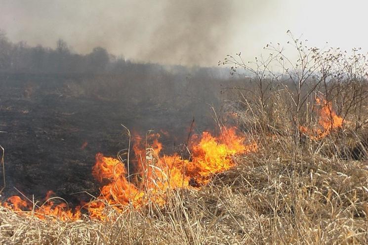 На Закарпатті з початку року в екосистемах сталося 280 пожеж