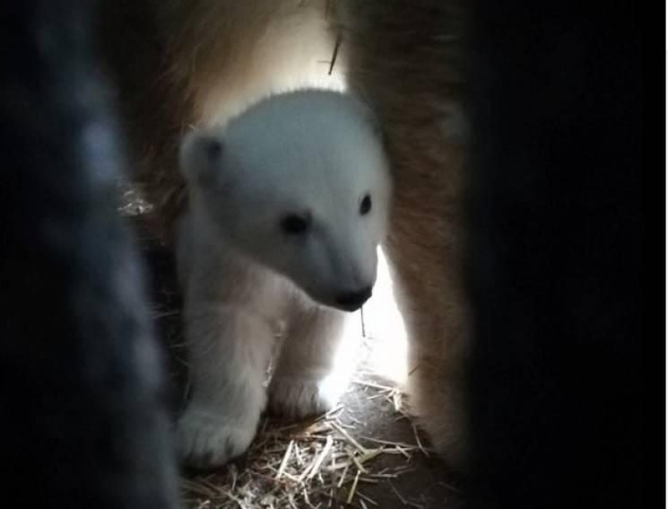У Миколаївському зоопарку малюк білого ведмедя знявся у першій фотосесії (ВІДЕО)