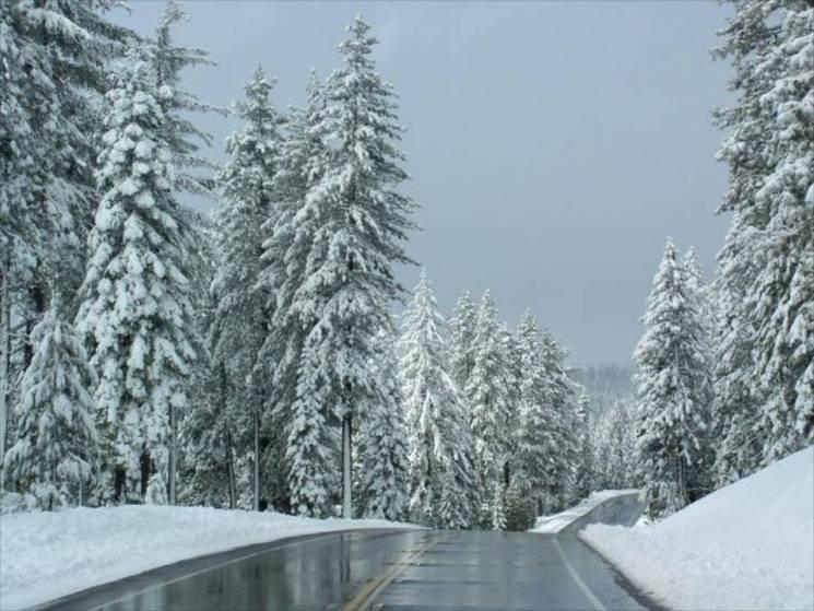 Морози тривають: У Сумах буде слизько та сніжно
