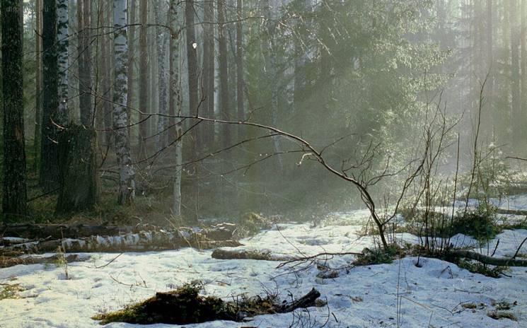 На Миколаївщину насувається весняне потепління