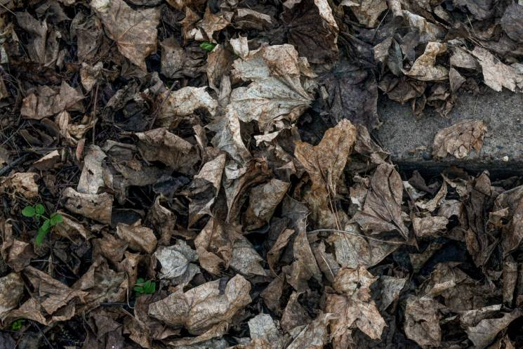 """Буряк """"помітив"""", що у Запоріжжі час прибрати минулорічне листя"""