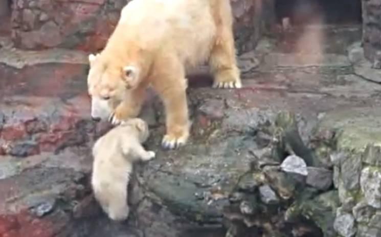 У Миколаївському зоопарку біле ведмежа вперше вийшло до людей (ВІДЕО)