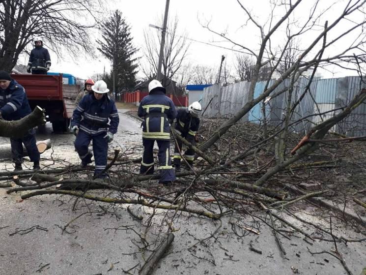 У Кам'янці повалене вітром дерево перегородило дорогу (ФОТО)