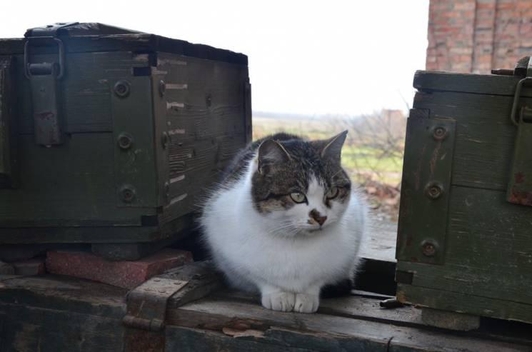 За що котам в АТО треба поставити пам'ятник - 32
