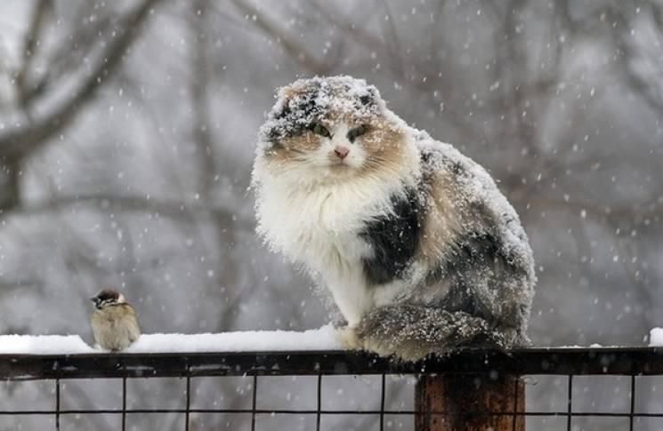 Вінничанам обіцяють плюсову температуру і сніг
