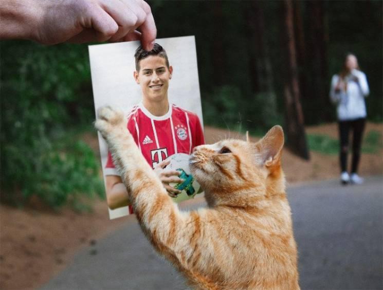Матч Ліги чемпіонів було зупинено через кота (ФОТО)