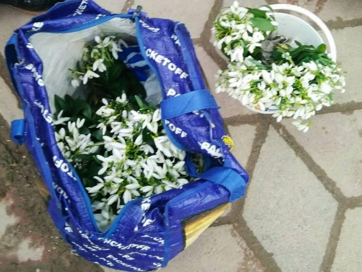 Жительці Тернопільщини загрожує штраф в 26 тисяч гривень за продаж первоцвітів