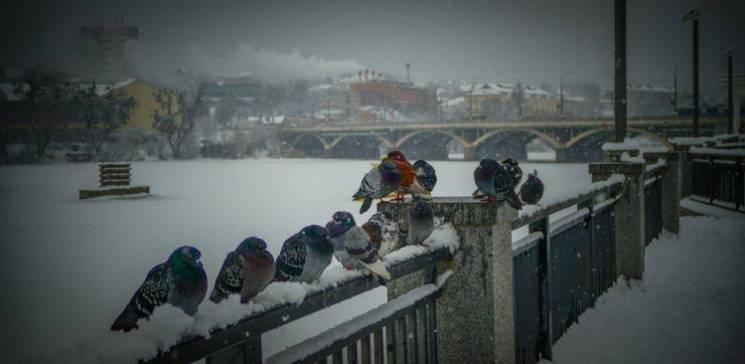 Вхурделило: Як зима захопила Україну в снігову пастку (ФОТО, ВІДЕО)