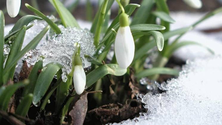 Весна до Києва продирається крізь колючий мороз: З понеділка теплішає
