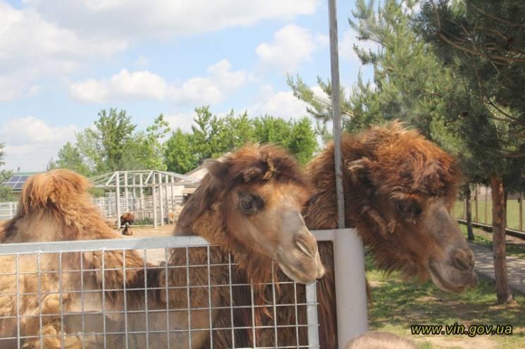 Зоопарк у Вінниці розвиватимуть як центр…