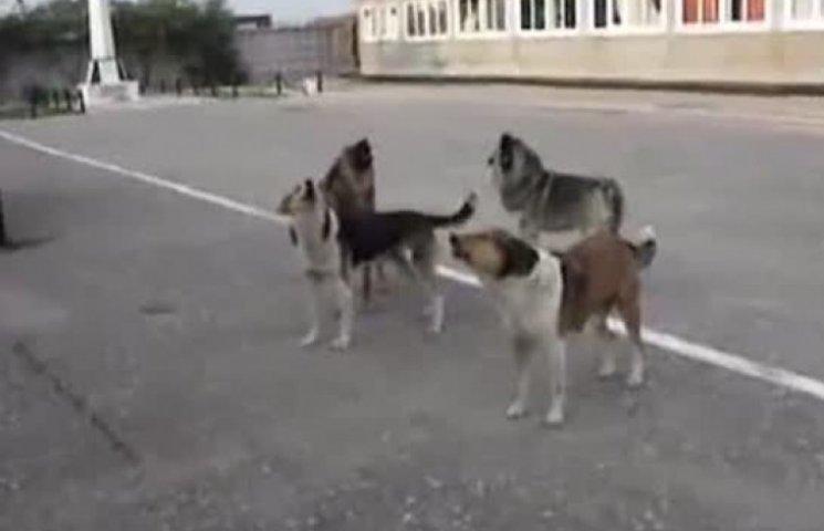 В Мариуполе дворовые собаки запели гимн России