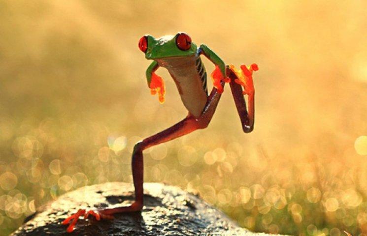 В Индии обнаружили 14 видов «танцующих лягушек»