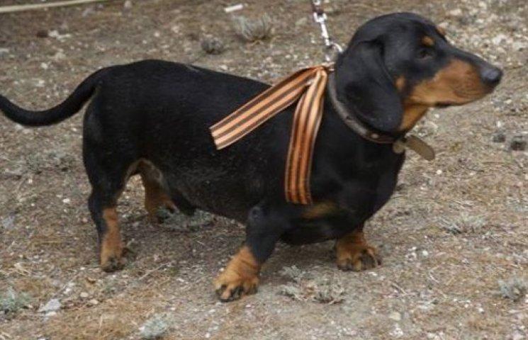 ФОТО ДНЯ: Национализм и сепаратизм добрались до собак