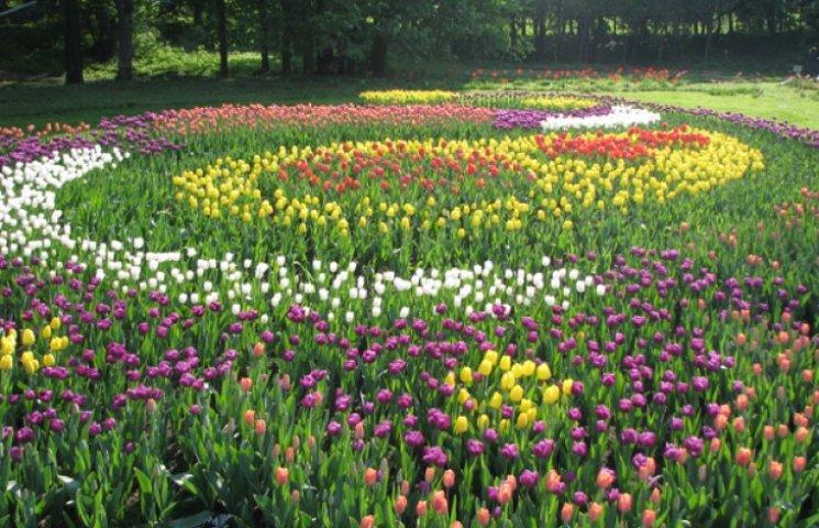 На Певческом поле в Киеве цветут тюльпаны и процветает торговля