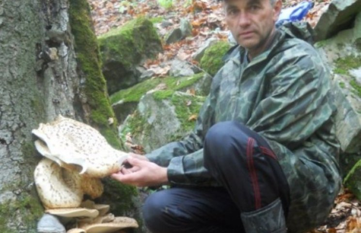 Закарпатці вже збирають делікатесні гриби з дерев (ФОТОФАКТ)