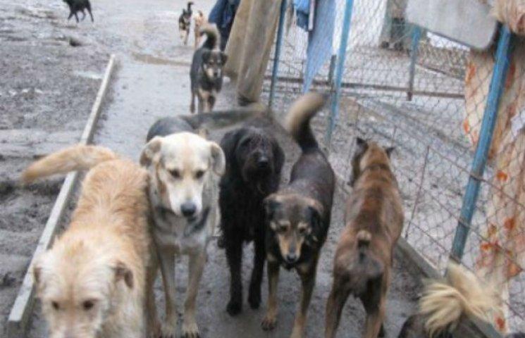 Сумські собаки, певне, не відчувають на собі тиску з боку мерії (ВІДЕОФАКТ)