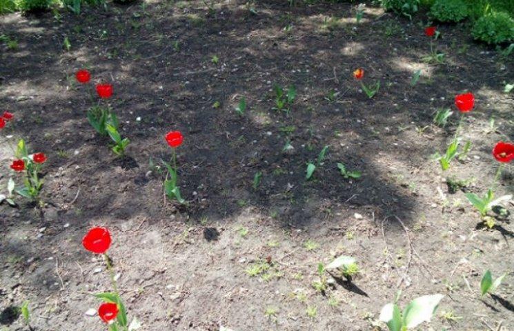 """У Сумах """"розквітає"""" квітковий вандалізм (ФОТОФАКТ)"""