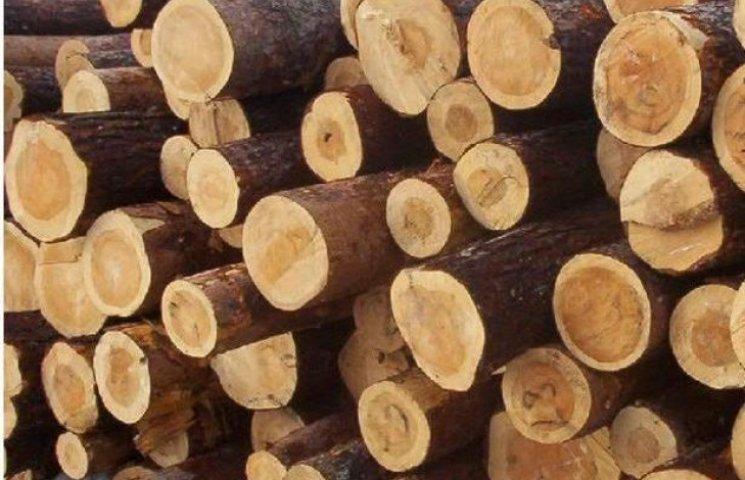 Масштаби самовільної вирубки лісів на Закарпатті зростають (ВІДЕО)