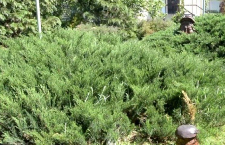 На Закарпатті у лісгоспі створили унікальну колекцію рідкісних дерев (ВІДЕО)