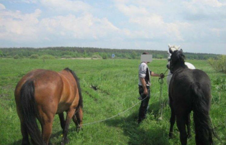 Недоскакав: Жителя Сумщині судитимуть за переправу коней до Росії