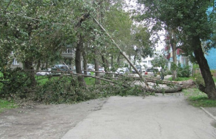 У Харкові біля школи висять оголені дроти і валяються дерева (ФОТОФАКТ)