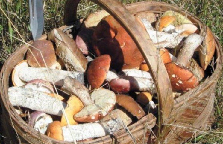 На Закарпатті ягоди і гриби збиратимуть за лімітами