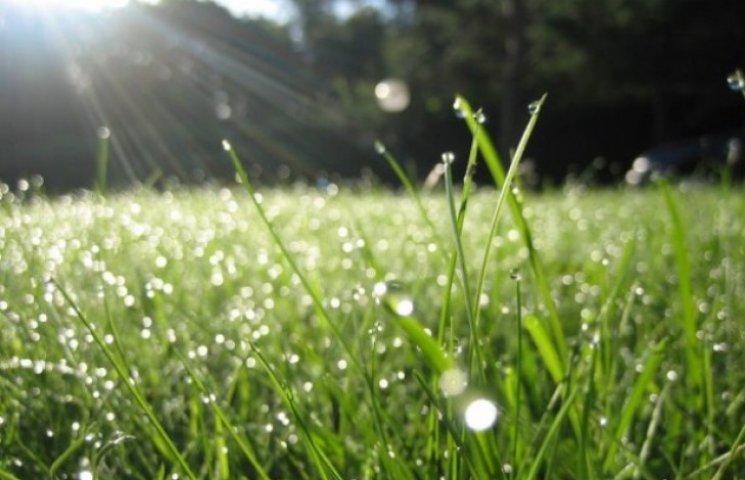 Закарпаття: прогноз погоди на 19 травня - день очікування роси