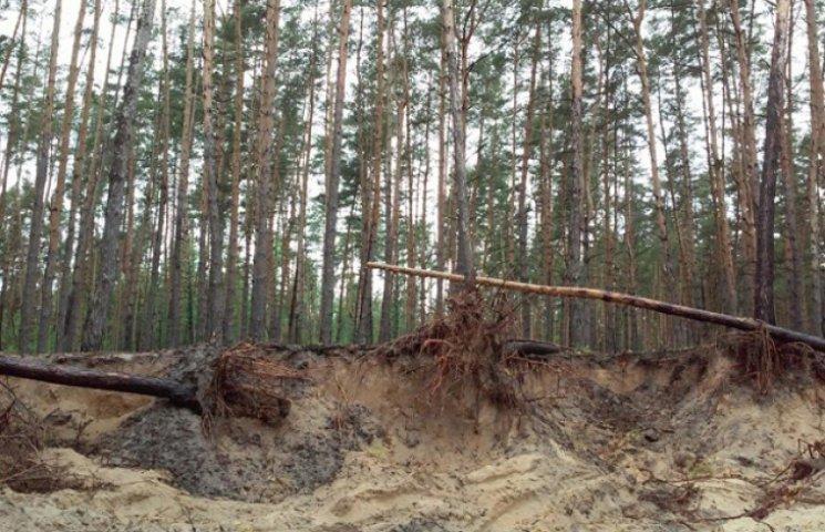 На Сумщині екологи звинуватили лісників у недбалості