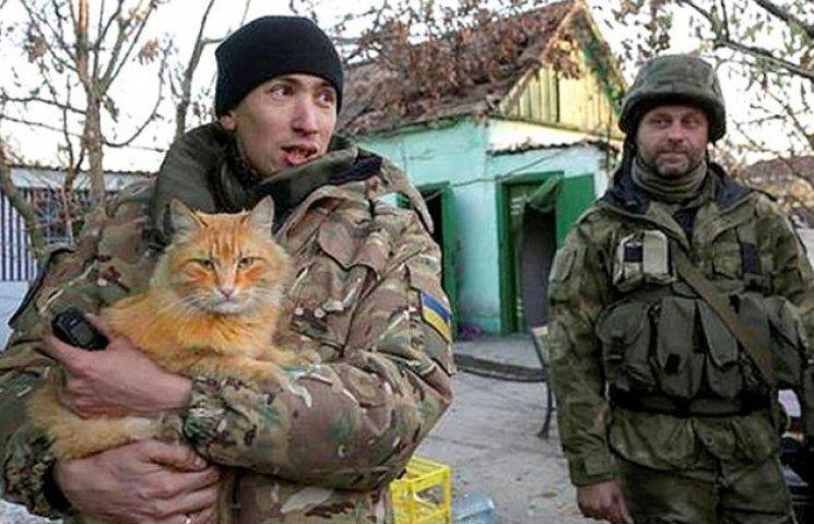 Душевні фото. Коти-укропи на війні (ФОТО)