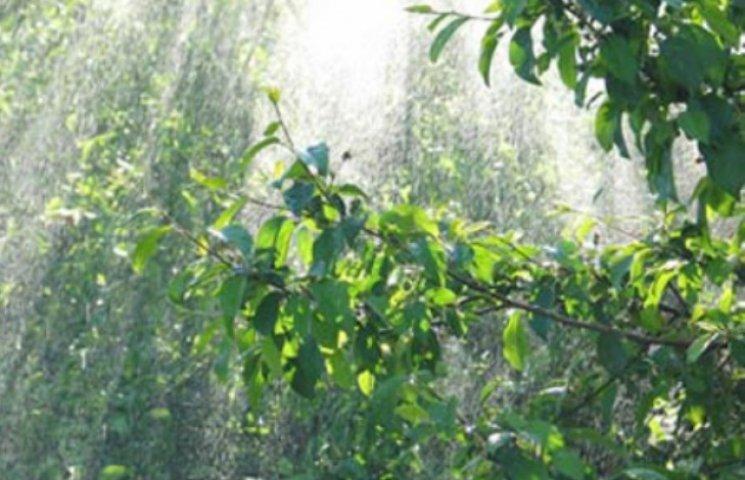 Закарпаття: прогноз погоди на 22 травня - кінець весни
