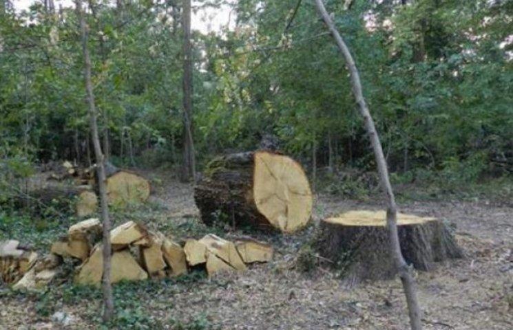 """Ліс біля санаторію """"Карпати"""" рубають законно - міліція"""