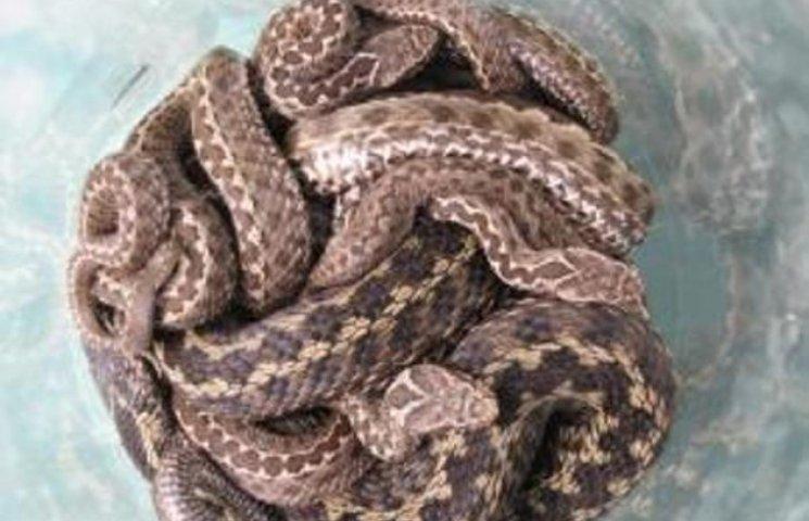 На Закарпатті в школі знайшли кубло змій