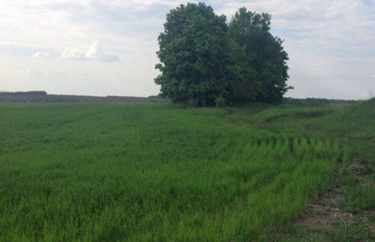 Фермер захопив 56 гектарів поля та засіяв його кукурудзою