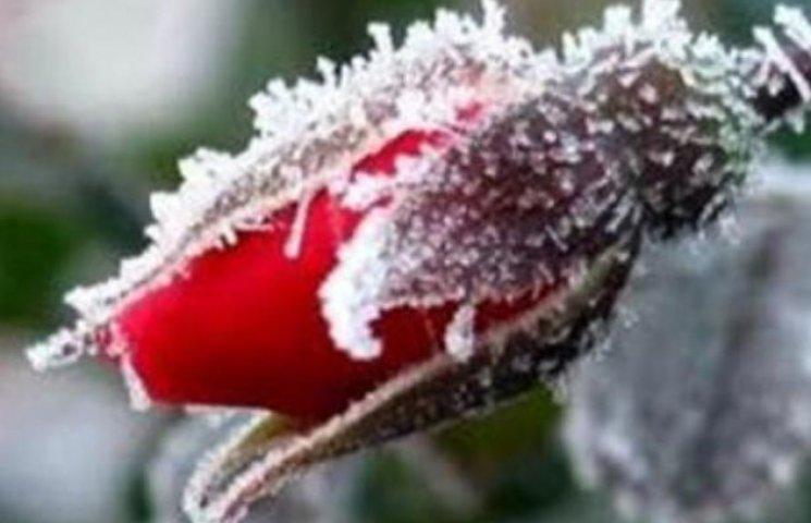 Погодні аномалії на Закарпатті - заморозки в кінці травня