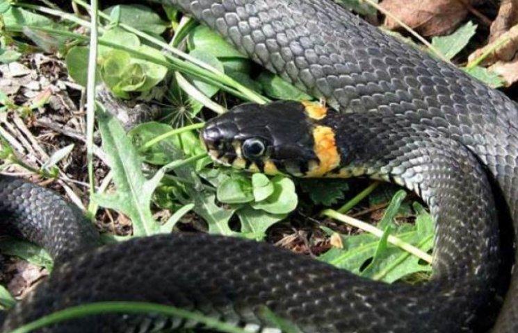 Закарпаття: прогноз погоди на 30 травня - остерігайтесь змій