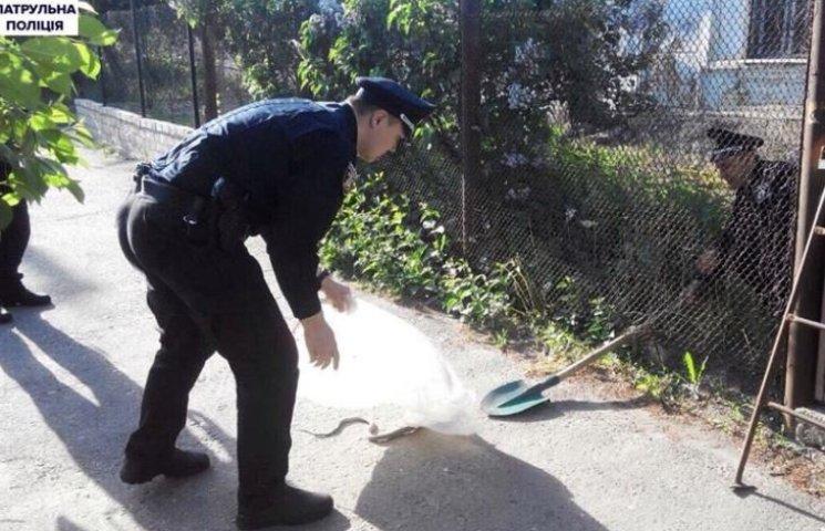 Миколаївців налякала змія, що повзала біля житлового будинку