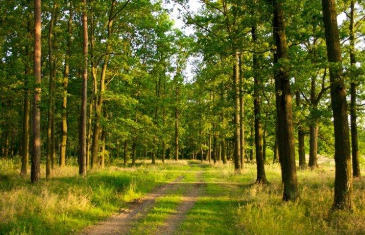 Коблевські чиновники незаконно вилучили 64 га лісу з держвласності