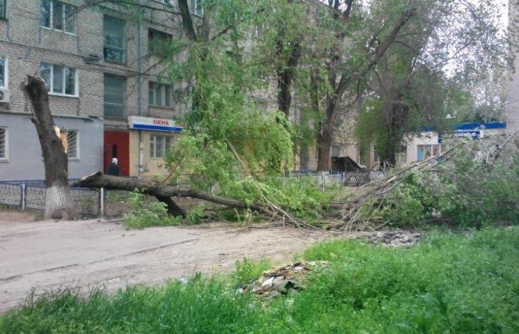 У Миколаєві від вітру завалилося дерево