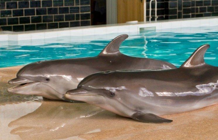 На Вінниччині викрали двох дельфінів