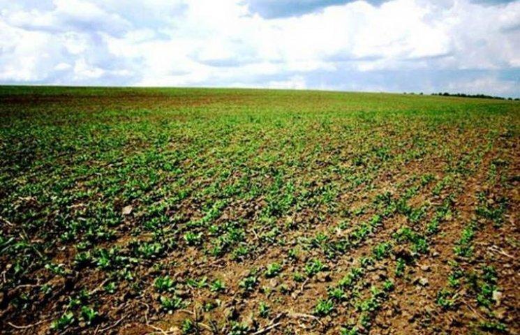 """Вінницький фермер засіяв """"наркоплантацію"""" у 50 гектарів"""