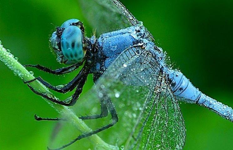 Миколаївцям покажуть загадковий світ комах