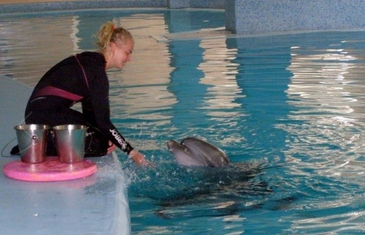 """Дельфінів, яких досі """"розшукує"""" вінницька поліція, показали в Трускавці"""