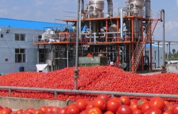 На Миколаївщині вирішать долю найбільшого в Європі заводу з переробки томатів