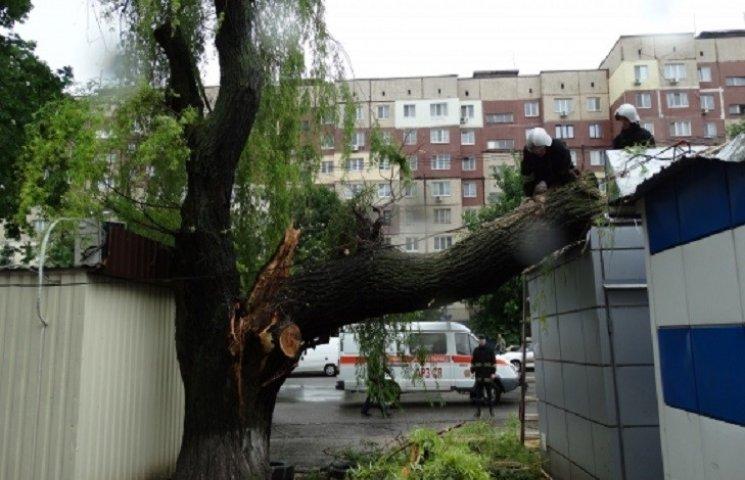 У Дніпропетровську дерево при падінні ледь не розтрощило кіоск